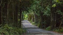 Island Back Road (Ernie Steven Dickey) Tags: erniedickey vancouverisland canada forest woods britishcolumbia flickrunitedaward
