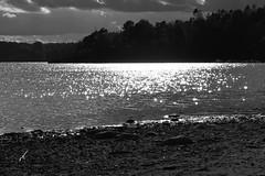 Is summer over? - In Explore (annesjoberg) Tags: fotosondag fotosöndag fs160918 stämning stamning atmosphere mood sunlight glitter beach blackwhite blackandwhite monochrome nikon nikond3200 nikonphoto autumn höst grisslinge värmdö varmdo