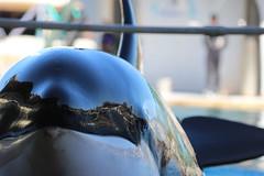IMG_6812 (Bebelouga) Tags: orque marineland killerwhale orca