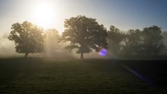 Ochtendmist boven de Semois . (look to see) Tags: semois mist brouiard villers villerssursemoisbelgium gaume flare trees pastorale canonfd40mmf14 vintagelens 2016