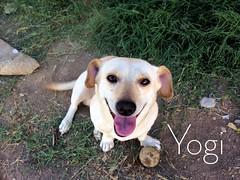 Yogi (Magnet Picture) (itscarlosgyo) Tags: dog