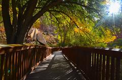 Walkway. Capitol Reef National Park, Utah. October (Jeff in Henderson) Tags: capitolreef nationalpark utah fall october walkway wooden leaves trees