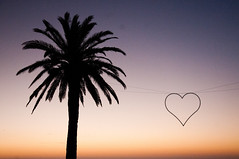 love (_Maganna) Tags: cape town south africa outdoors outside sunset nikon palm tree heart sky colours