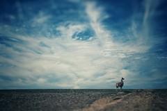 Lonely Llama (scottwills) Tags: safari scottwills clouds blue sky llama scott wills landscape