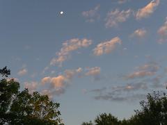 PA190303 (Paul Henegan) Tags: moon clouds dawn earlymorninglight trees waninggibbous