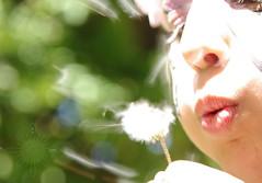 Hope (s.haydon) Tags: sala2013 hope makeawish dof dandelion seeds blow pentaxk20d pentaxart sala southaustralianlivingartists 2013 childhoodoncology depthoffield child