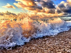 (Andy Royston / Ft Lauderdale Sun) Tags: photostream