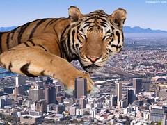 ZZZzzzZZZ (maselko69) Tags: city macro animals giant sleep tiger tiny squish crush