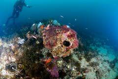 Cannon Pile (ShaunMYeo) Tags: scubadiving gibraltar cannons calpe underwaterphotography  gibilterra ikelite      gibraltr  cebelitark gjibraltar ibraltaro hibraltar xibraltar giobrltar gibraltrs gibraltaras ibilt