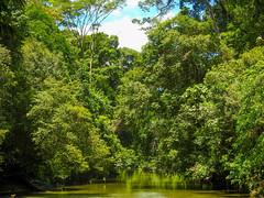 DSCN0525 (vhenryz) Tags: park trip trees sky cloud nature water clouds forest river reserve national mangrove jungle brunei ulu temburong