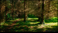 160510-7995-XM1.jpg (hopeless128) Tags: trees france woods eurotrip fr 2016 nanteuilenvalle aquitainelimousinpoitoucharentes aquitainelimousinpoitoucharen