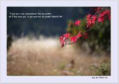 Autumn Hymn (jongsoolee5610) Tags: sydney australia atumn mtwilsons