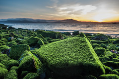 Moss Rock (Yvonne Rathbone) Tags: bay beach bizarre clouds coast dusk evening fog gold green lake mountainrange moutain outdoors rock rocks sea seaside serene shore shoreline sky still stillness strange sunset surreal twilight water waves yellow challengegamewinner technical 1855mmf3556gvr parks wideangle