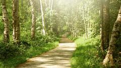 Sunlit path in forest (andzwe) Tags: trees sun netherlands dutch forest spring bomen woods path curves nederland warmth sunlit bos lente drenthe dwingeloo bochten dwingelderveld warmthofthesun