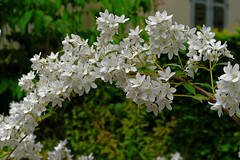 Mai Botanik - 2016-0030_Web (berni.radke) Tags: may growth mai botany botanicalgarden mnster botanik botanischergarten wachstum