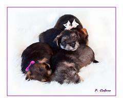Mis nuevos vecinos... (pilcaber) Tags: mascotas perros pets dogstendernessbeauty