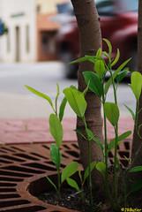 Little Plants, Big World (jrbutler90) Tags: photography nikon d200 kodachrome plants nature environment overcome sidewalk wanderings cityscape ground view