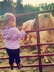 Little Girl and A Horse. (EquineLope93) Tags: horselover addiction love friends horse littlegirl
