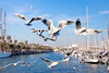 Floating in the air (Hernan Piñera) Tags: pájaros aves bandada gaviotas alas vuelo volando puerto birds flock gulls wings flying harbor photo photography photograph imagen image pic foto fotografia fotografo photographer hernanpiñera