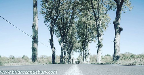 Plane trees along road into Lieuran Les Beziers, France. #lieuranlesbeziers #trees🌲 #planetrees #road #sceniclocations #scenic #france #france #francephotos #francephotoshoot #french #frenchvillage #countryside #bluesky #roadmarkings #cente