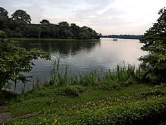 2016.05 Singapore River Safari 0011 (marcin matula) Tags: 201605 singapore nightsafari