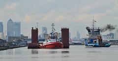 Tugs + Dina Launcher (3) @ KGV Dock 15-10-16 (AJBC_1) Tags: london ship boat vessel dlrblog england unitedkingdom uk ajc northwoolwich eastlondon newham londonboroughofnewham tug tugboat nikond3200 shipsinpictures dutchblue londonsroyaldocks royaldocks offshoresupportvessel hollandoffshorerederijbv kinggeorgevdock kgvdock dinalauncher barge submersiblebarge myklebusthaugmanagementas zpbear kotugsmittowage londoncityskyline cityskyline citybuilding canarywharf docklands