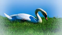 On the soft grass (malioli) Tags: pictures canon photography photo europe image pics croatia cro hrvatska