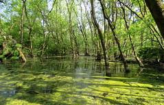 IMG_0066x (gzammarchi) Tags: lago italia natura paesaggio ravenna bosco riflesso monocrome marinaromea puntealberete