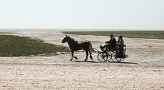 Sulky et Henson en Baie de Somme (Dominique Levesque) Tags: sea horse sun mer soleil horizon sable outlook hitch riders lamanche cavaliers baiedesomme sulky fouet attelage