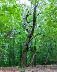 Radnor Lake State Natural Area - May 21, 2015 (mikerhicks) Tags: usa landscape geotagged sam unitedstates nashville hiking tennessee phillips ruth hdr tennesseestateparks radnorlakestatepark radnorlakestatenaturalarea sigma18250mmf3563dcmacrooshsm canoneos7dmkii geo:lat=3606507333 geo:lon=8679081667