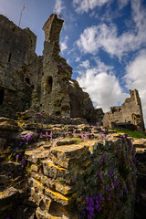 Middleham Castle ruins (Mister Electron) Tags: england castle ancient ruins ruin medieval wildflowers northyorkshire richardiii kingrichardiii englishheritage middleham middlehamcastle nikond800