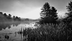"""Misty Morning"" (Steve InMichigan) Tags: mist fog sunrise blackwhite michigan marsh"