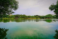 2016-05-14 18.06.23 (pang yu liu) Tags: park ecology pond 05 may daily eco pate    2016