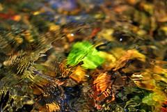 Murmullos do Pai Mio - Murmurs of Mio river (Gato M) Tags: water rio river agua galicia mio