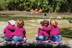 Kindergartenkinder ... bei den Flamingos ... (Kindergartenkinder) Tags: park essen dolls sony flamingos annette tivi milina gruga himstedt annemoni kindergartenkinder sanrike ilce6000