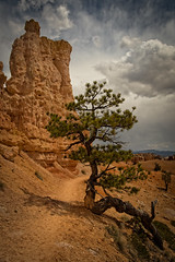 Desert Pine (Bryce Canyon) (campmusa) Tags: trees sky clouds landscapes utah nationalpark spring rocks stones highdesert moab brycecanyon hoodoos 2016 coloradoplateau garfieldcounty nikond750