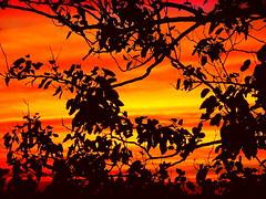 New York Sunset (dimaruss34) Tags: sunset newyork brooklyn image dmitriyfomenko fall52014