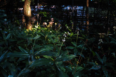 SDQ_3373lr (yoshitoshi ABe) Tags: 20160904 吉祥寺 井の頭公園 sdquattro sigma15mmf28exdgdiagonalfisheye