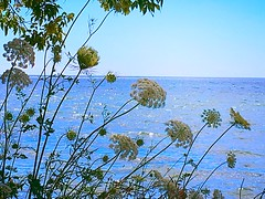 Created with Photo Editor- http://axiem.net/editor CCphotoworks  Presqu'ile Point (CCphotoworks) Tags: wildflowers landscapes scenics lakes presquilepoint