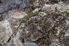 untitled-1572.jpg (minorshk) Tags: cascades cathedralrock deeplake hiking i90corridor pct pacificcresttrail pacificnorthwest peggyspond squawlake washington ronald unitedstates us