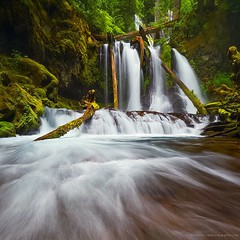 Hang tight (gmacfly) Tags: wood strong current mist huge cascades oregon nature waterfall rain water