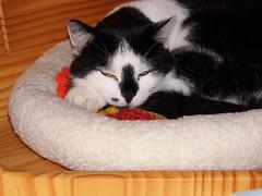 Claudia ist müde (ute_hartmann) Tags: claudia körbchen eckbank