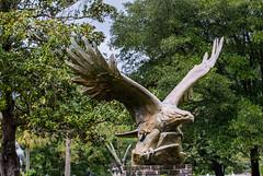 And Like Time the Eagle Flies (Gabriel FW Koch (fb.me/FWKochPhotography on FB)) Tags: bird eagle hawk sculpture statue wings outside grass garden eos dof bokeh sun sunlight canon 100mm lseries forest woods lawn