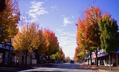 A Street Where We Live (robinlamb1) Tags: landscape street trees autumncolour fall outdoor colourfulleaves fraserhighway aldergrove cars vehicles storefronts