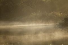 sfeerfotografie (gerardkanters.nl) Tags: sfeerfotografie de biesbosch met gerardkantersnl