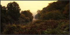 Autumn's Mood. (Picture post.) Tags: landscape nature green river mist trees flowers autumn bracken riverbank paysage arbre eau interestingness