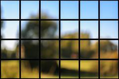 Project 366 - 290/366: Composition (sdejongh) Tags: 290366 366 bokeh composition cross edges frame framework grid iron landscape lines mosaic project puzzle repetition rust square steel texture tiles