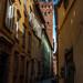 Lucca Guinigi Tower-1