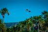 "Hyacinth Macaw <a style=""margin-left:10px; font-size:0.8em;"" href=""http://www.flickr.com/photos/41134504@N00/16726611994/"" target=""_blank"">@flickr</a>"