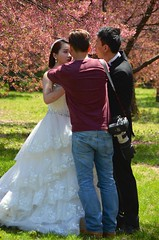 Touching Up The Bride (Joe Shlabotnik) Tags: cherry groom bride spring blossoms flushingmeadows queens cherryblossoms faved 2015 twoviewsonefave afsdxvrnikkor55300mm4556ged april2015
